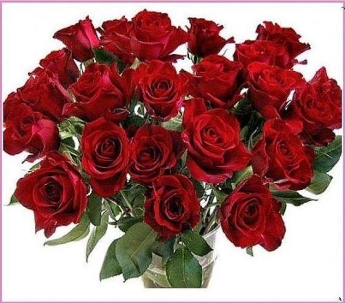 roze-1.png